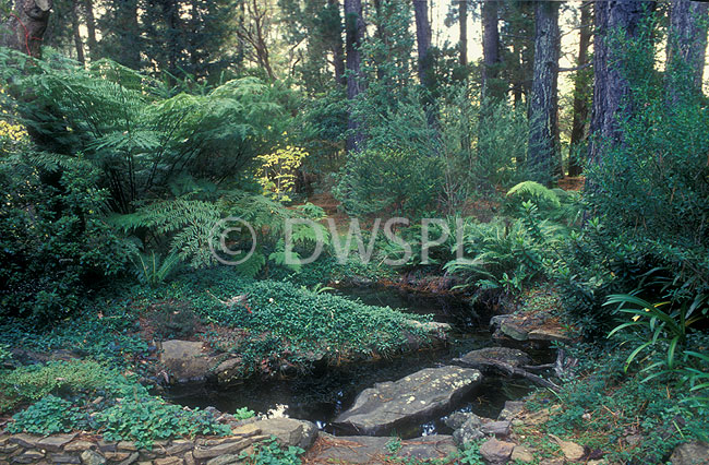 A royalty free image of bush garden featuring garden pond for Garden pond unlimited