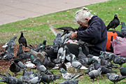 Australia, sydney, nsw, new South Wales, people, woman, women, female, females, homeless, homeless people, homeless woman, homeless men, bird, birds, pigeon, pigeons.
