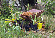Garden, gardens, wheelbarrow, wheelbarrows, pot, pots, potted, garden pot, garden pots, outdoor pot, outdoor pots.