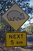 Australia, New South Wales, sydney, sign, signs, roadsign, roadsigns, road sign, road signs, wombat, wombats, warning, warning sign, warning signs, australian mammal, australian mammals.