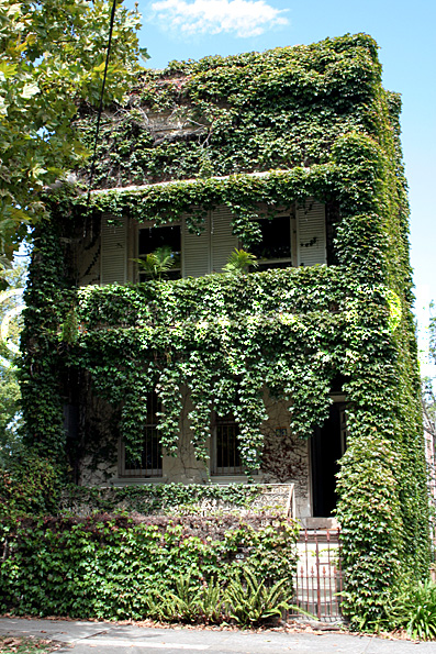 Ivy covered two story terrace house inner city sydney for New terrace house