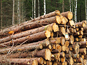 Industry, timber, timber industry, wood, woodpile, woodpiles, pile of wood, piles of wood, logging, logging industry, log, logs, logging, AB67,