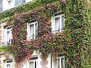 Europe, france, architecture, house, houses, housing, window, windows, ivy, hedera, AB67,