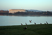 Australia, act, australian capital territory, territory, territories, Canberra, great dividing range, water, lake, lakes, burley griffin, lake burley griffin, library, libraries, national library, national library of australia, architecture, duck, ducks.