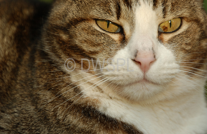 cat boarding colorado springs