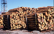 New zealand, nz, south island, lyttleton, log, logs, logging, lumber, timber industry, logging industry, agriculture, industry, port, ports, christchurch.