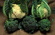 Vegetable, vegetables, cauliflower, cauliflowers, Cruciferae, Brassica, Brassica oleracea, oleraceae, brocolli,