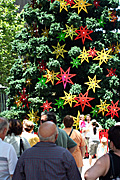 Australia, New South Wales, sydney, people, christmas, christmas scene, christmas scenes, martin place, christmas tree, christmas trees, crowd, crowds.