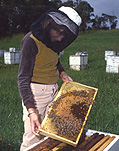 People, child, children, puberty, apiculture, apiary, colony, colonies, bee, bees, beekeeping, beekeeper, beekeepers, hive, hives, bee hive, bee hives, beehive, beehives, honey, honey production, bee yard, bee yards, girl, girls, teenager, teenagers, teenage girl, teenage girls, adolescent, adolescents, bee farmer, bee farmers, bee farming.