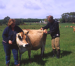 Agriculture, cow, cows, cattle, livestock, dairy cow, dairy cows, dairy cattle, vet, vets, occupation, occupations, man, men, male, males, rural, rural scene, rural scenes, animal, animals, woman, women, female, females, outdoors.