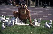 People, man, men, male, males, homeless, homeless people, homeless man, homeless men, derelict, derelicts, australia, park, parks, sydney, nsw, new South Wales, gull, gulls, bird, birds, seagull, seagulls, newspaper, newspapers, paper, read, reads, reading, beard, beards, communications, media.