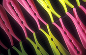 Pattern, patterns, background, backgrounds, effect, effects, repetition, repetitious, repetitive, peg, pegs, plastic, washing, washing peg, washing pegs, pink, yellow, clothes peg, clothes pegs.