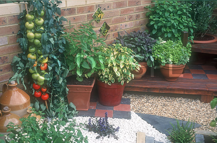 Gallery For Outdoor Potted Herb Garden