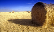 Australia, Rural, Rural Scene, Rural Scenes, Agriculture, Farming, Farmland, farm, farms, hay, haybale, haybales, hay bale, hay bales, crop, crops, Vic, Victoria, Port Campbell NP, Port Campbell National Park, straw, straw bale, straw bales.