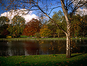 Europe, Western Europe, UK, Britain, British Isles, England, United Kingdom, Great Britain, london, autumn scene, autumn scenes, park, parks, st james, st james park, autumn, autumn scene, autumn scenes, lake, lakes, water, tree, trees, autumn foliage, FF25,