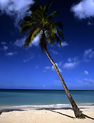 Caribbean, the caribbean, carribean islands, grand anse, grand anse beach, beach, beaches, grenada, tree, trees, palm, palms, palm tree, palm trees, shoreline, shorelines, seashore, seashores, cloud, clouds, FF25,