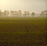 Farming, Farmland, farm, farms, Agriculture, rural, rural scene, rural scenes, crop, crops, wheat, wheat crop, wheat crops, wheat field, wheat fields, seedling, seedlings, field, fields, england, great britain, united kingdom, uk.