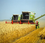 Farming, Farmland, farm, farms, Agriculture, rural, rural scene, rural scenes, crop, crops, wheat, wheat crop, wheat crops, wheat field, wheat fields, harvest, harvests, harvesting, combine harvester, combine harvesters, machine, machines, machinery, farm machinery, farm equipment, equipment, farmer, farmers, occupation, occupations.