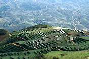 Asian, South east Asian, southeast asia, Vietnam, sapa, terrrace, terraces, rice, rice terrace, rice terraces, rice growing, rice field, rice fields, agriculture, rural, rural scene, rural scenes, Farming, Farmland, farm, farms.