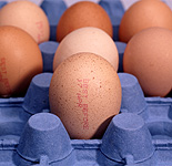 Egg, eggs, chicken, chickens, hen, hens, stamp, stamps, carton, cartons, cardboard, paper, cardboard carton, cardboard cartons.