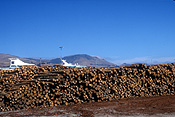 Pacific islands, new zealand, south island, logs, logging, logging industry, timber industry, timber industry, lumber, dockyard, dockyards, dock, docks, lyttleton.