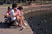 People, family, families, mother, mothers, parent, parents, child, children, duck, ducks, water, park, parks, bench, benches.