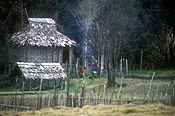 Papua new guinea, png, kokoda, kokoda trail, kokoda track, hut, huts, house, houses, housing, jungle, jungles, roof, roofs, rooves.